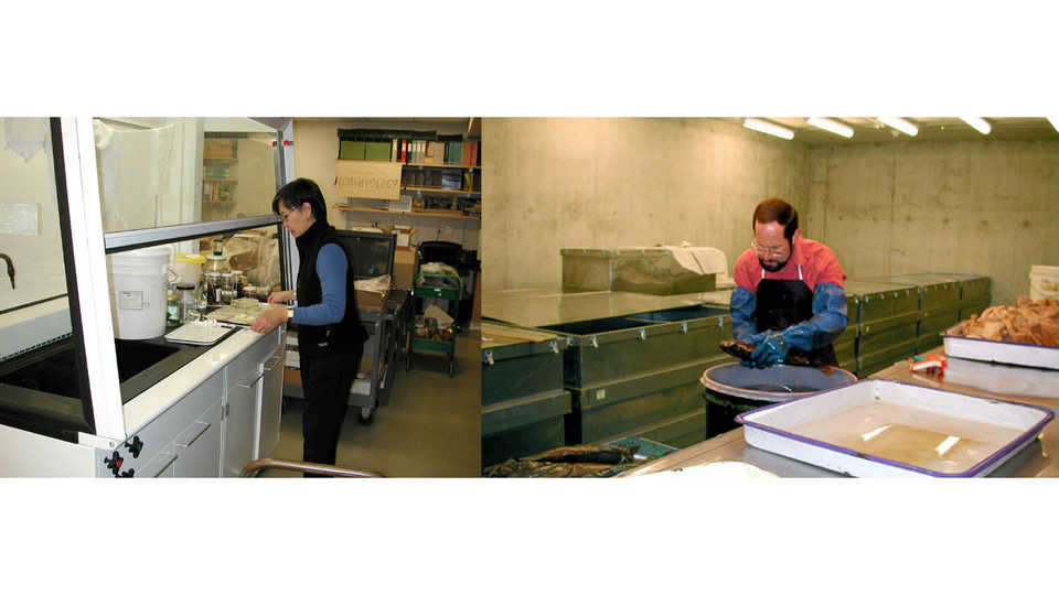 Ichthyology staff working with specimens