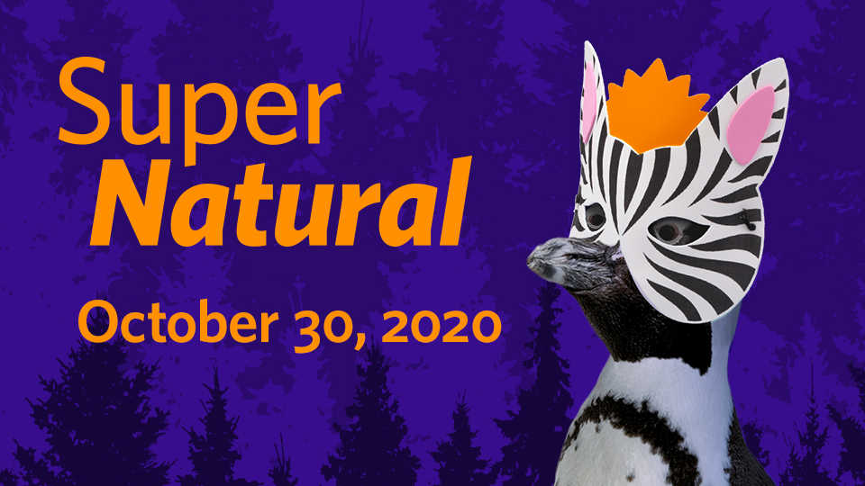 SuperNatural banner image featuring penguin wearing a zebra mask