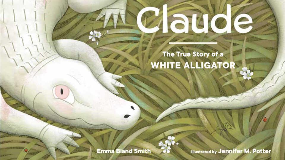 Cover illustration of Claude the albino alligator
