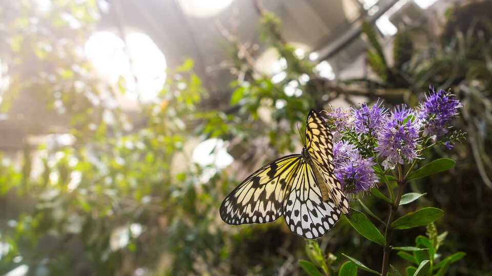 Butterfly in the Osher Rainforest