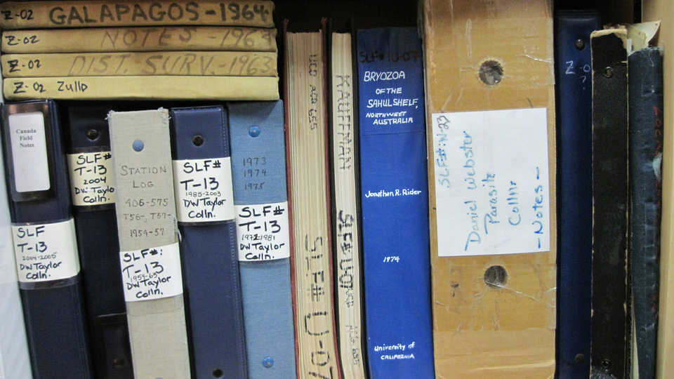 Volumes of CAS Invertebrate Zoology field notes on a shelf
