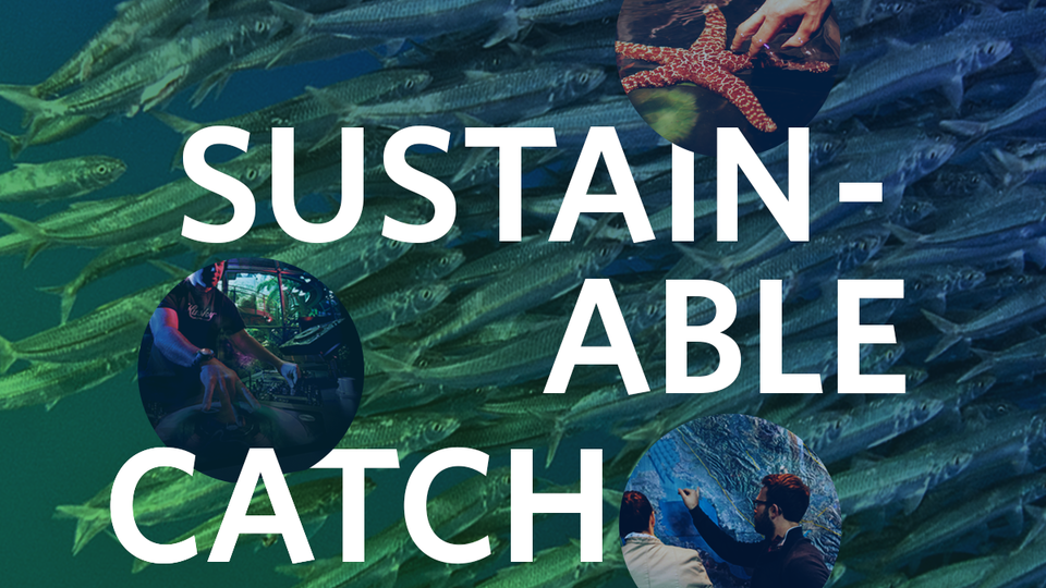 sustainable catch
