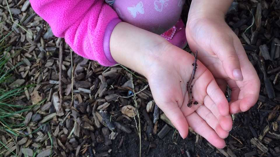 A girl holds an earthworm in her hands