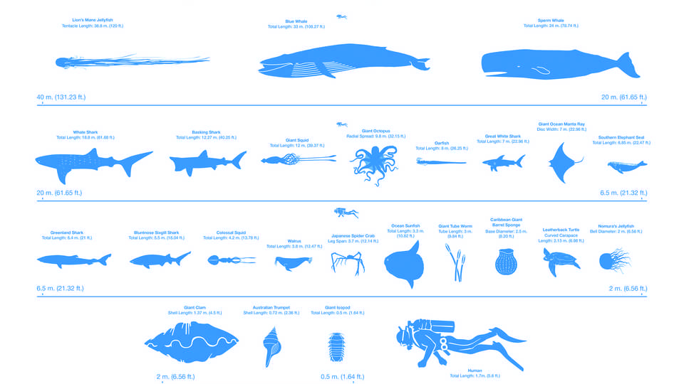 Graphic from ocean giant publication