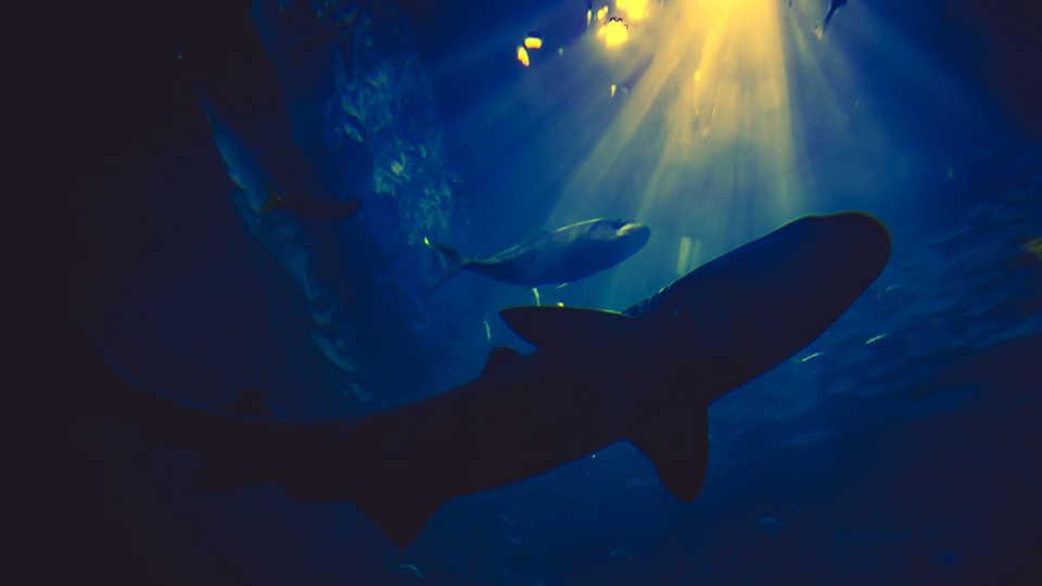 Underwater sharks