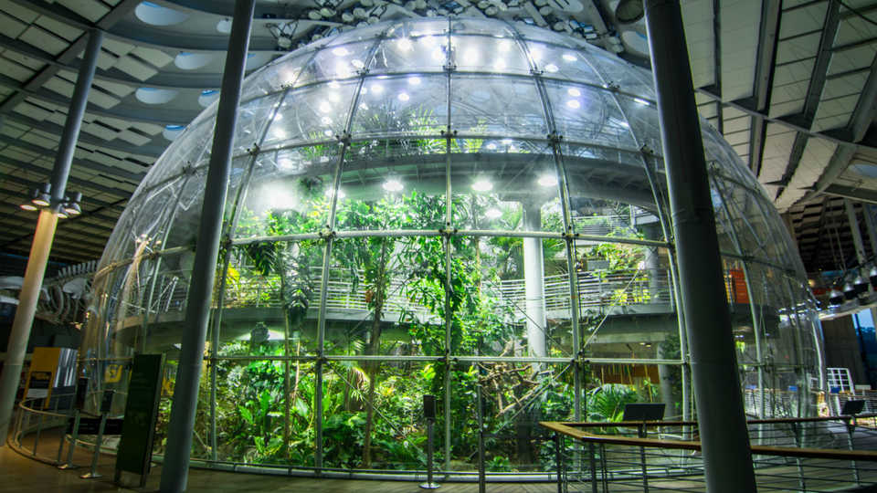 March 2017 Programs And Events At The California Academy