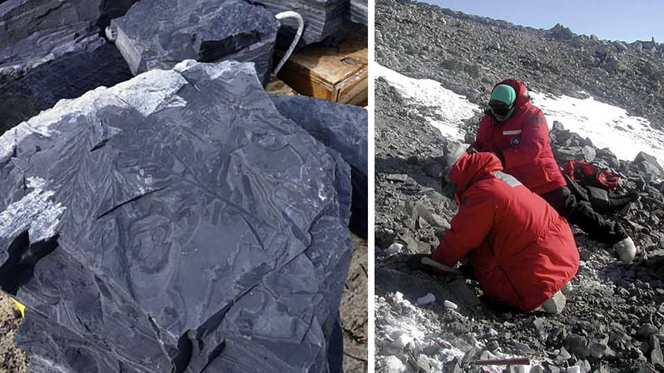 Long View Study No. 39 (Antarctic Fossils)