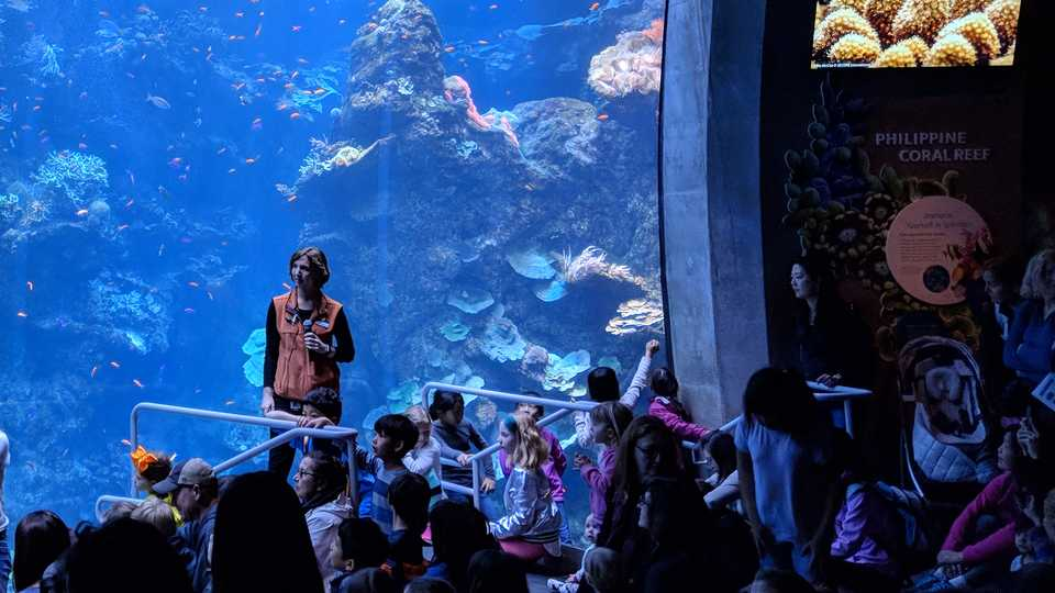 Presenter in front of Philippine Coral Reef Tank