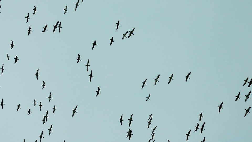 Flying Flock