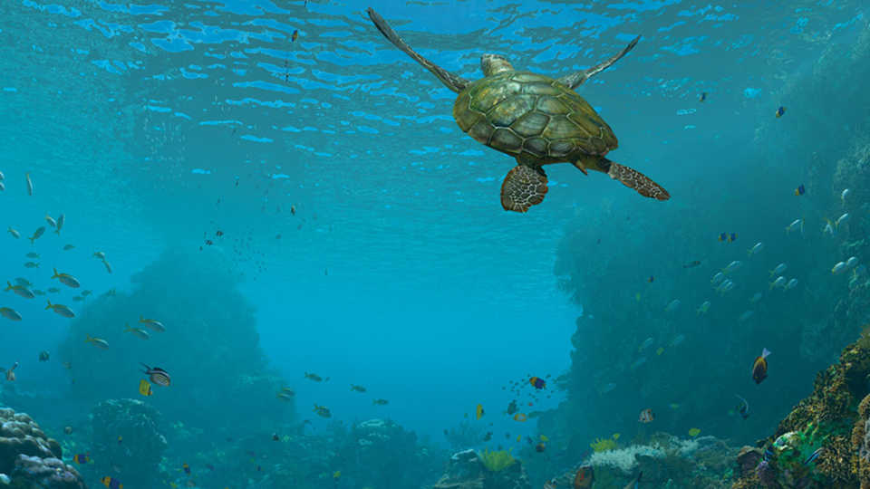 Sea turtle swims in blue water in this still image from Expedition Reef show