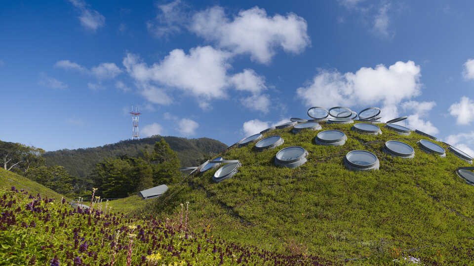 Living Roof of the Academy