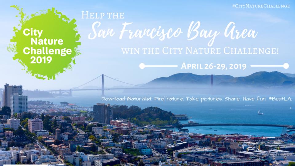 San Francisco Bay Area City Nature Challenge, April 26-29, 2019