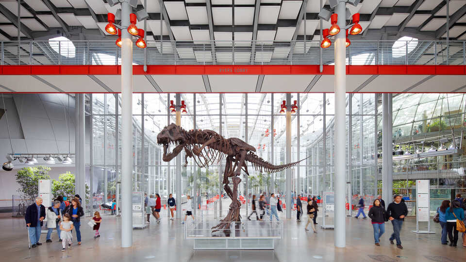 A gigantic fossil of Tyrannosaurus Rex stands in the light-filled lobby of the California Academy of Sciences