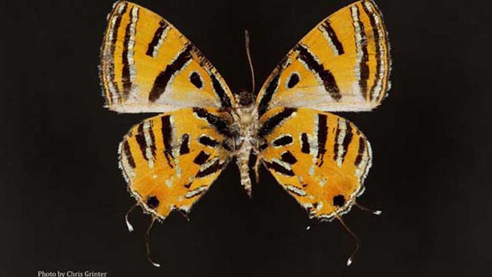 Entomology Collection | California Academy of Sciences