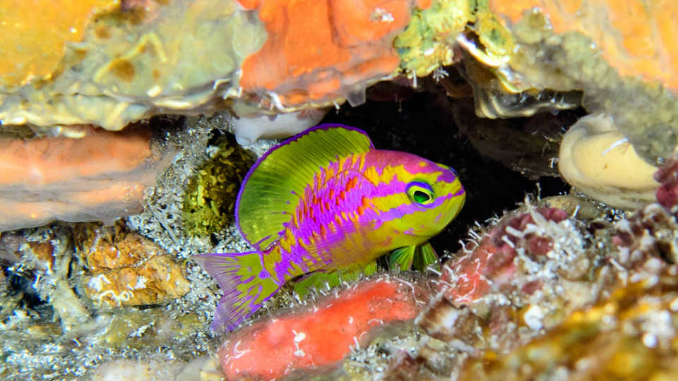 Scientific Divers From The California Academy Of Sciences Discover