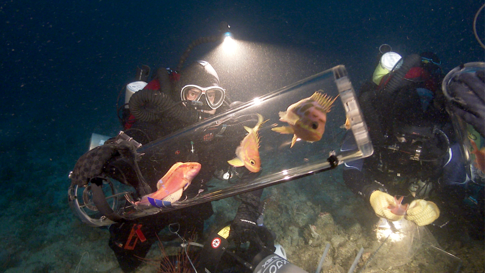 Scientists discover more than 100 new marine species in the