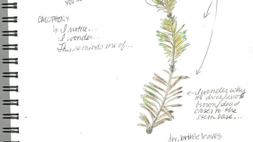 Lesson Plan | Introduction to Scientific Sketching