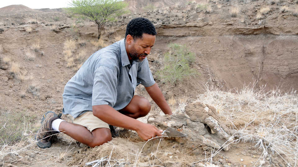"Dr. Zeresenay ""Zeray"" Alemseged excavating at Dikika"
