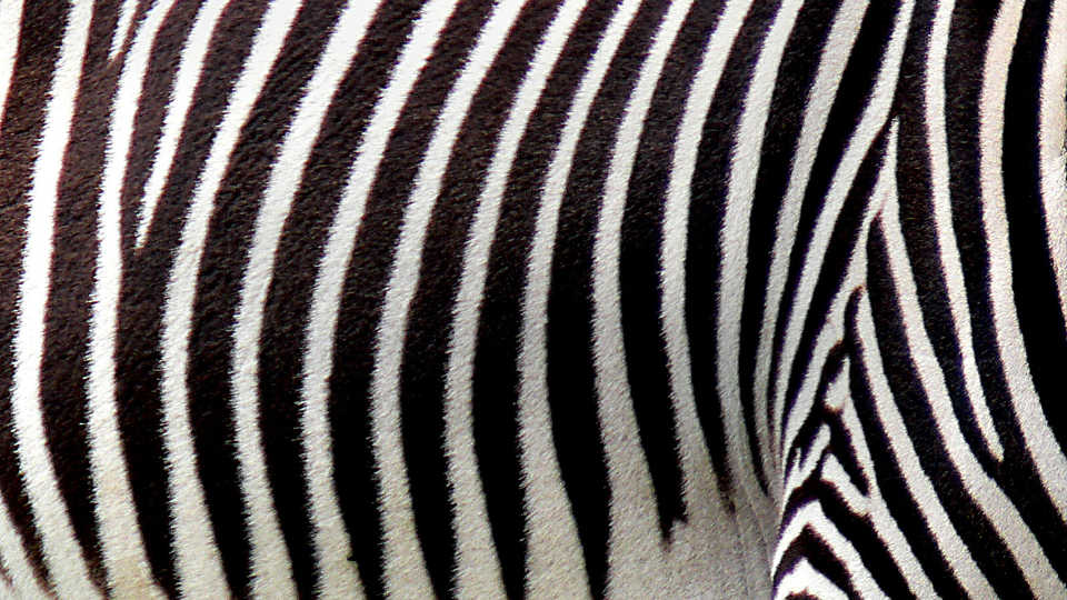 Zebra stripe pattern