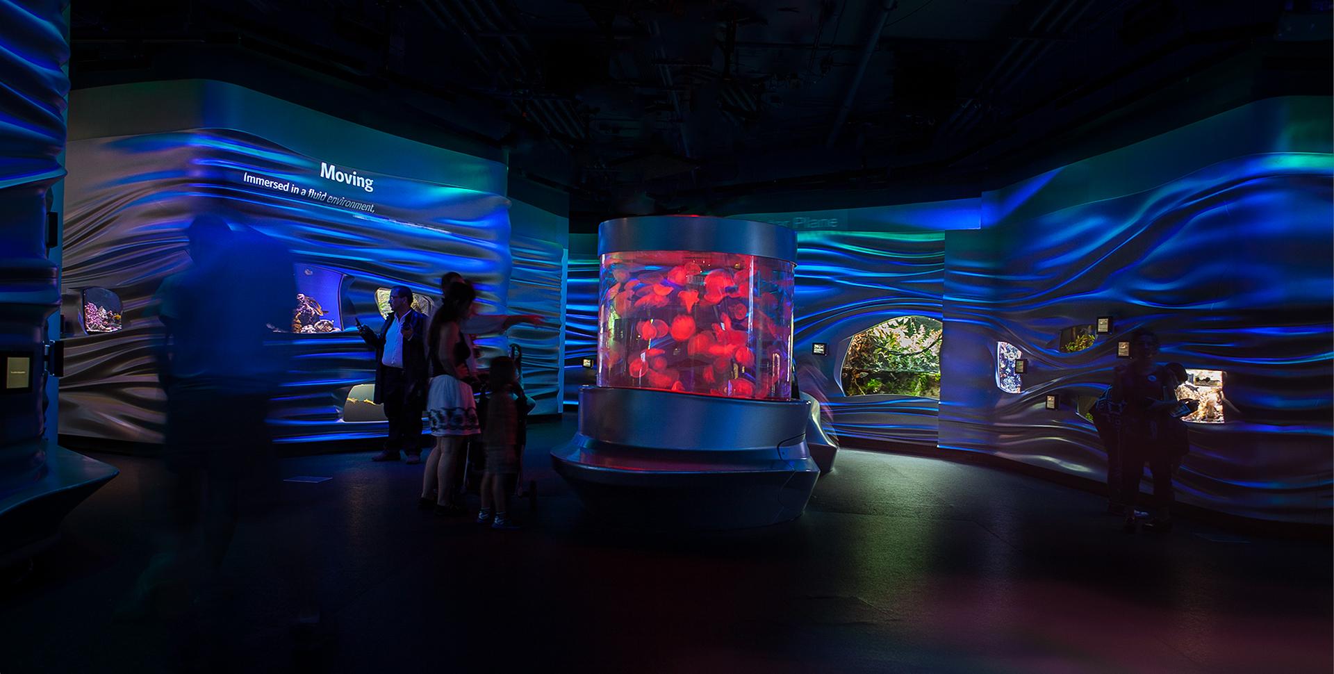 Water Planet Diverse And Unique Aquarium Exhibit