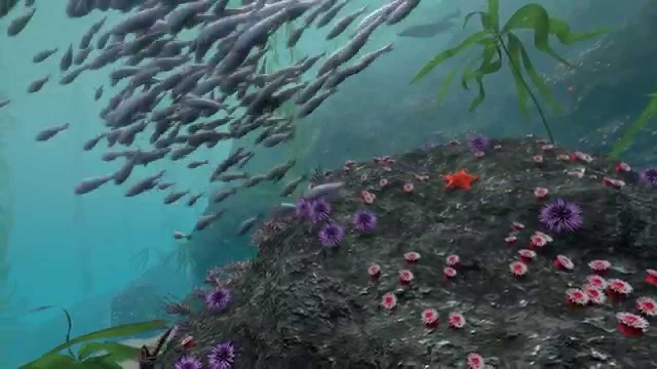 Video Take A Virtual Dive In A Kelp Forest Habitat Earth