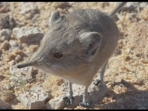 New Mammal Discovery